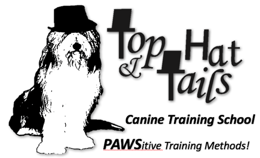 <br />&#8203;Top hat and tails&nbsp;<br />Canine Training School &nbsp; &nbsp; &nbsp; &nbsp; &nbsp; &nbsp; &nbsp; &nbsp; &nbsp; &nbsp; &nbsp; &nbsp; &nbsp; &nbsp; &nbsp; &nbsp; &nbsp; &nbsp; &nbsp; &nbsp; &nbsp; &nbsp; &nbsp; &nbsp;1.574.259.6460